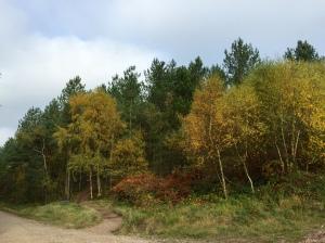 Autumnal Cannock